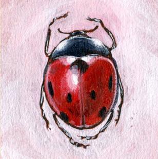 Retrouvez ici des modèles d'insectes
